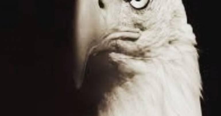 Il volo dell'aquila: la leggenda